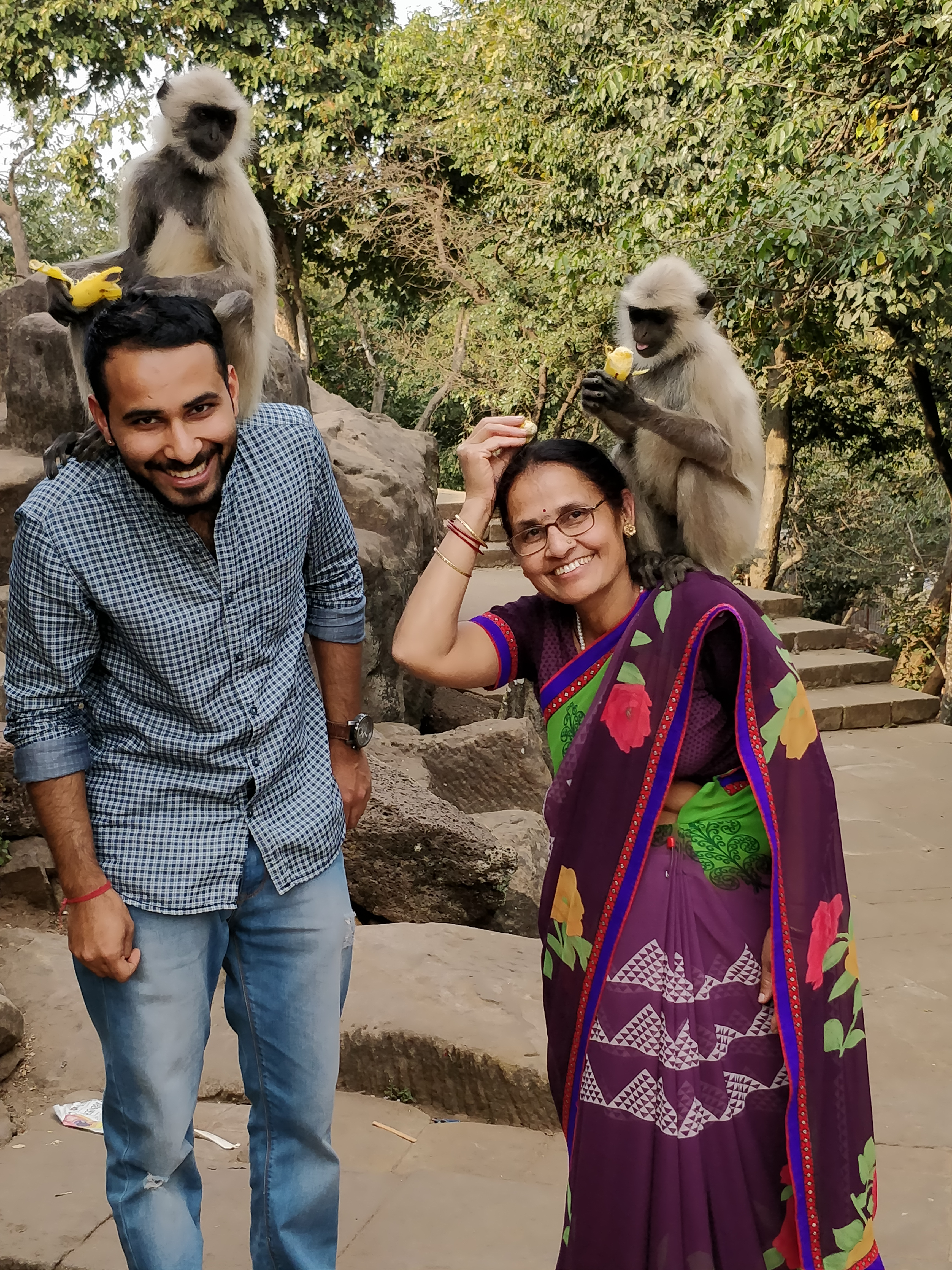 Langurs seated on Shoulders of an Indian guy and his mother, receiving bananas at Udaygiri and Khandagiri Caves, Bhubaneswar, India